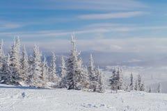 Paisaje hermoso del invierno con los árboles Imagen de archivo