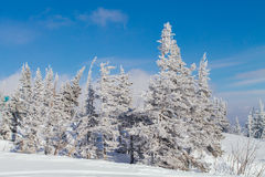 Paisaje hermoso del invierno con los árboles Fotografía de archivo
