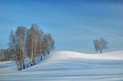 Paisaje hermoso del invierno con los árboles de abedul y con las sombras largas Fotos de archivo libres de regalías