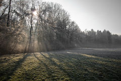 Paisaje hermoso del invierno con los árboles desnudos del bosque de la niebla y el fondo congelado del campo Fotos de archivo libres de regalías