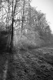 Paisaje hermoso del invierno con los árboles desnudos del bosque de la niebla y el fondo congelado del campo Fotografía de archivo