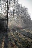 Paisaje hermoso del invierno con los árboles desnudos del bosque de la niebla y el fondo congelado del campo Foto de archivo