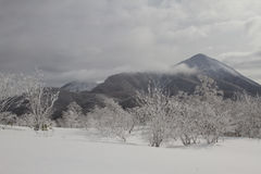 Paisaje hermoso del invierno con los árboles nevados Foto de archivo libre de regalías