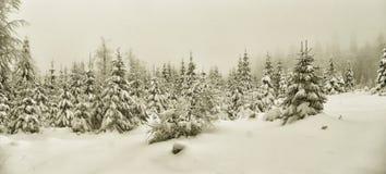 Paisaje hermoso del invierno con los árboles nevados frescos de la picea fotografía de archivo libre de regalías