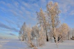 Paisaje hermoso del invierno con los abedules en la puesta del sol Fotografía de archivo libre de regalías