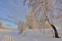 Paisaje hermoso del invierno con los abedules en la puesta del sol Foto de archivo