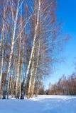 Paisaje hermoso del invierno con nieve y árboles Imagenes de archivo