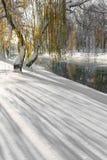 Paisaje hermoso del invierno con nieve y árboles frescos en un parque Fotografía de archivo