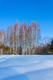 Paisaje hermoso del invierno con nieve y abedules Imagen de archivo libre de regalías