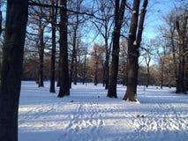 Paisaje hermoso del invierno en Berlin Park Hasenheide con la tierra nevada, los árboles, el cielo azul y la luz de Sun foto de archivo