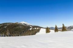 Paisaje hermoso del invierno en las montañas con el pi nevado Imagen de archivo