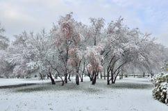 Paisaje hermoso del invierno - las nevadas en la ciudad parquean Imagenes de archivo