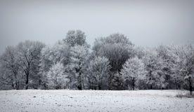 Paisaje hermoso del invierno - Sajonia, Alemania Imágenes de archivo libres de regalías