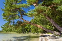 Paisaje hermoso del lago Svityaz Foto de archivo libre de regalías