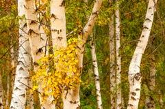 Paisaje hermoso del otoño Foto de archivo