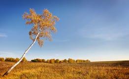 Paisaje hermoso del otoño con el abedul solo Fotos de archivo