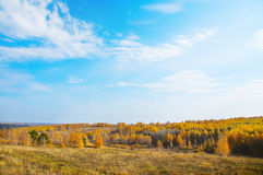 Paisaje hermoso del otoño con el cielo azul y los árboles amarillos Foto de archivo libre de regalías