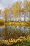 Paisaje hermoso del otoño con los abedules amarillos en la orilla del lago Imagen de archivo
