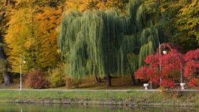 Paisaje hermoso del otoño con niebla sobre el lago Fotografía de archivo