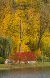 Paisaje hermoso del otoño con niebla sobre el lago Fotos de archivo
