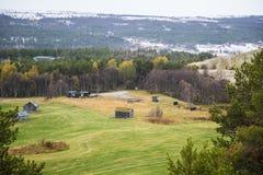 Paisaje hermoso del otoño en Noruega con las hojas amarillas Fotografía de archivo libre de regalías