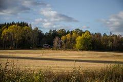 Paisaje hermoso del otoño en Noruega con las hojas amarillas Foto de archivo libre de regalías