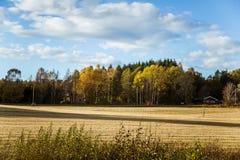 Paisaje hermoso del otoño en Noruega con las hojas amarillas Foto de archivo