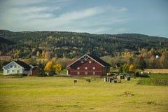 Paisaje hermoso del otoño en Noruega con las hojas amarillas Fotos de archivo libres de regalías