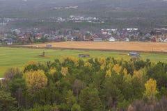 Paisaje hermoso del otoño en Noruega con las hojas amarillas Imagenes de archivo