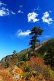 Paisaje hermoso del otoño en parque de los glaciares de Hailuogou Fotografía de archivo libre de regalías