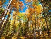 Paisaje hermoso del otoño en Xinjiang Fotos de archivo libres de regalías