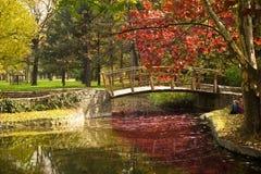 Paisaje hermoso del otoño Fotos de archivo