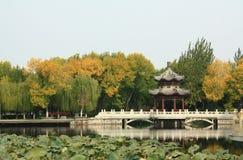 Paisaje hermoso del parque en otoño fotos de archivo libres de regalías