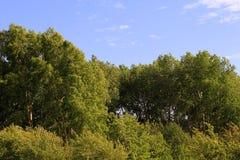 Paisaje hermoso del verano, árboles de hojas caducas verdes foto de archivo libre de regalías