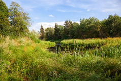 Paisaje hermoso del verano con el pequeño río tranquilo Fotos de archivo
