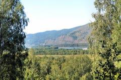 Paisaje hermoso del verano con los árboles de abedul siberia Fotos de archivo