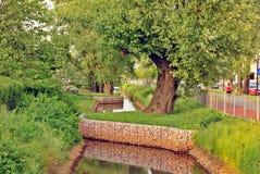 Paisaje hermoso del verano con los árboles y la hierba verde imagen de archivo libre de regalías