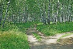 Paisaje hermoso del verano con los caminos de tierra en un bosque del abedul Imagen de archivo