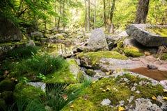 Paisaje hermoso del verano en la área remota Fotos de archivo libres de regalías