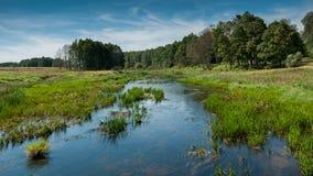 Paisaje hermoso del verano río estrecho en un área cenagosa delante del bosque Imágenes de archivo libres de regalías