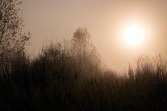 Paisaje hermoso - empáñese en el bosque del otoño Fotos de archivo