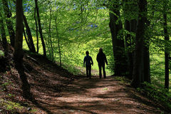 Paisaje hermoso en el bosque negro en Alemania Foto de archivo
