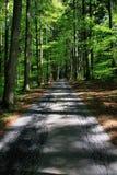 Paisaje hermoso en el bosque negro en Alemania Fotografía de archivo