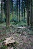 Paisaje hermoso en el bosque negro en Alemania Imágenes de archivo libres de regalías