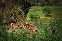 Paisaje hermoso en el bosque negro en Alemania Foto de archivo libre de regalías