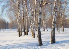 Paisaje hermoso en el parque del invierno, el bosque Sombras de árboles en la nieve, espacio de la copia Fotografía de archivo