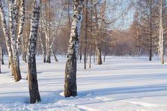 Paisaje hermoso en el parque del invierno, el bosque Sombras de árboles en la nieve, espacio de la copia Fotos de archivo