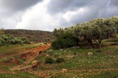 Paisaje hermoso en Ifrane Fotos de archivo