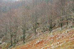 Paisaje hermoso en las montañas de Mehedinti en otoño foto de archivo