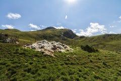 Paisaje hermoso en Montenegro con la hierba fresca y los picos hermosos Parque nacional de Durmitor en la pieza de Montenegro de  foto de archivo